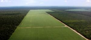 La-deforestacion-de-la-Amazonia