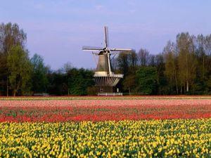 Los jardines de Keukenhof (Holanda) 3