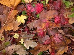 Tareas del jardín en otoño 1