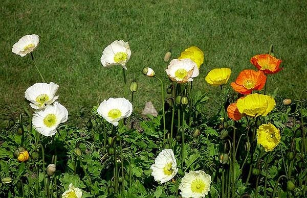 compost-casero-para-flores-y-plantas