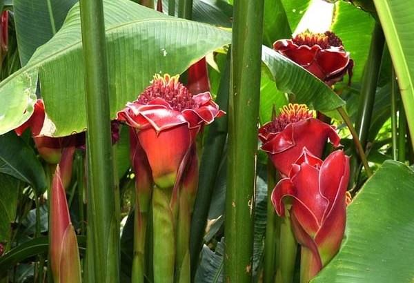 Proteger las plantas en invierno