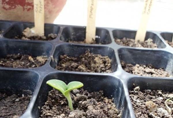 Tiempo de siembra de plantas de invierno