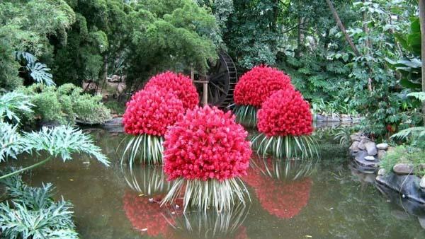 plantas acuáticas, características