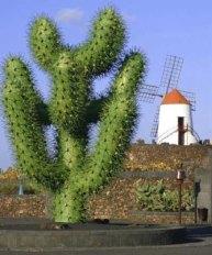 jardin_de_cactus