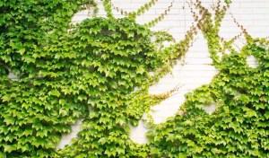 plantas-trepadoras-3dcg6