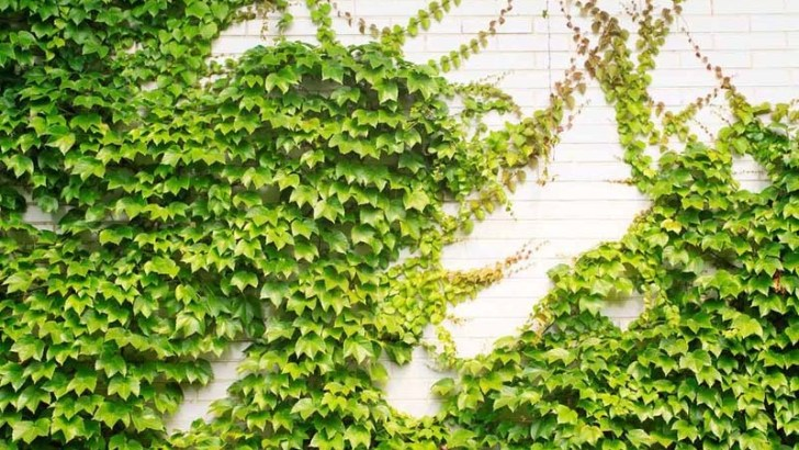Características de las plantas trepadoras