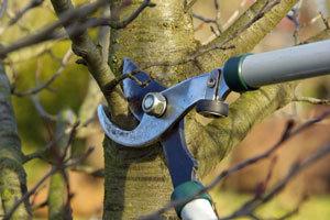 pruning-feb