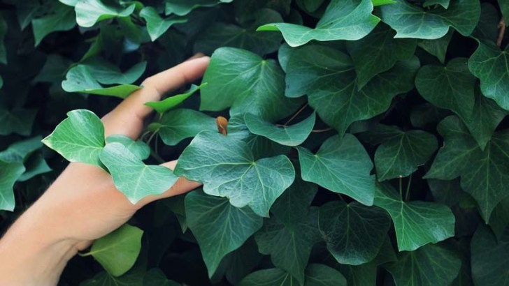 3 plantas que purifican el aire