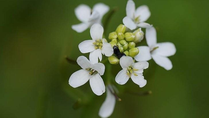 ¿Por qué  florecen las flores en primavera?