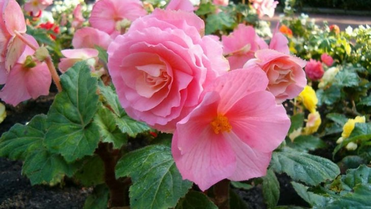 Cinco bonitas flores de verano
