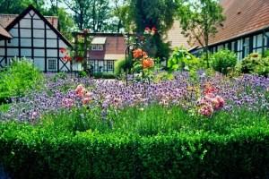 jardin-casero-g8rh8