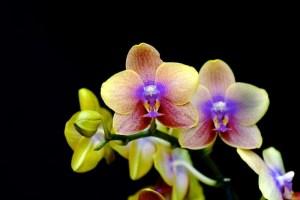 curiosidades-sobre-las-orquideas