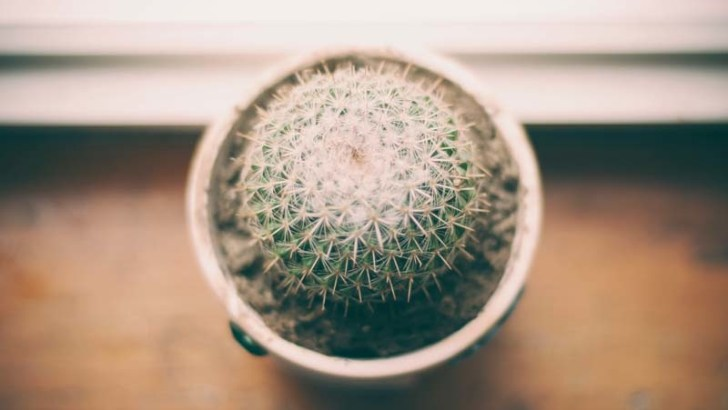 Cómo podemos cuidar un cactus