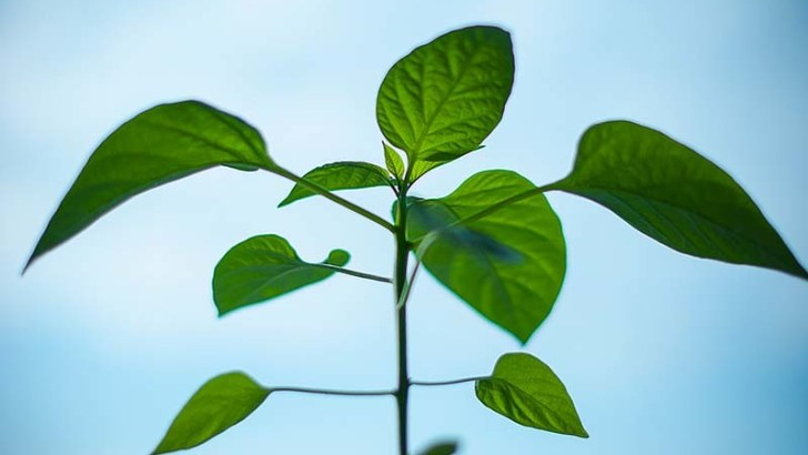 La inteligencia de las plantas