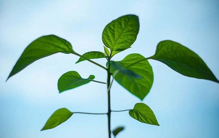 inteligencia-de-las-plantas