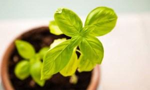 plagas-en-las-plantas
