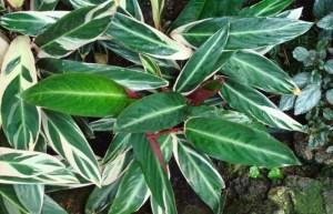 Las plantas más delicadas