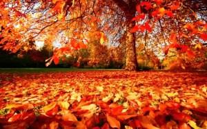 otono-7-arbol-y-hojas-caidas