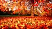 ¿Por qué las plantas pierden las hojas en otoño?