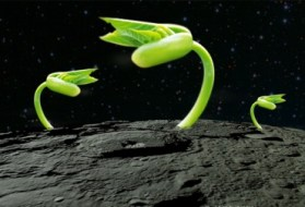 plantas_luna