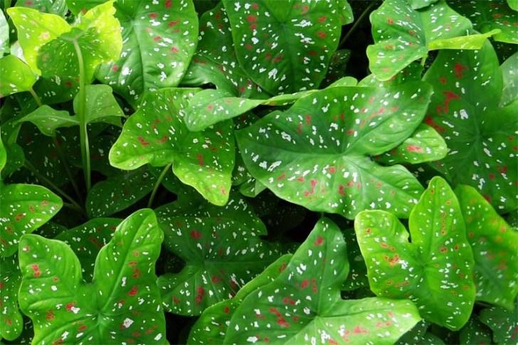 nombres científicos de las plantas