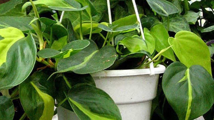 3 plantas que no necesitan muchos cuidados