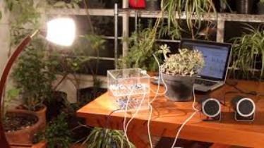 Pulsu(m) Plantae: lo que sienten las plantas