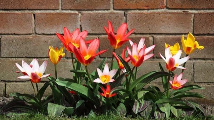 Prepara tu jardín para la primavera