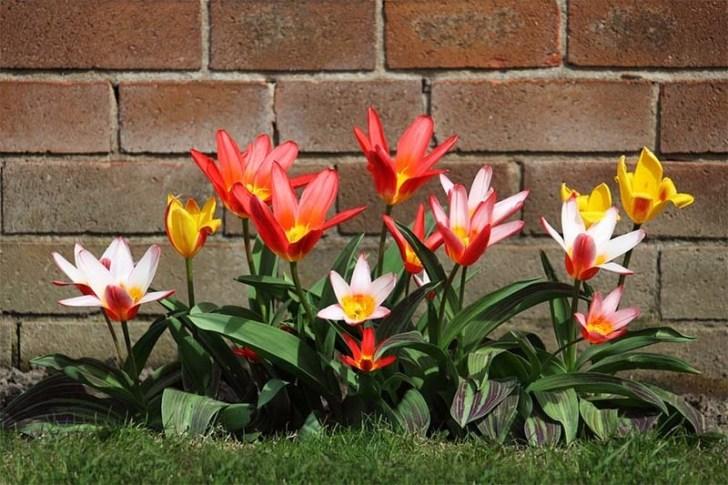 flores-de-jardin