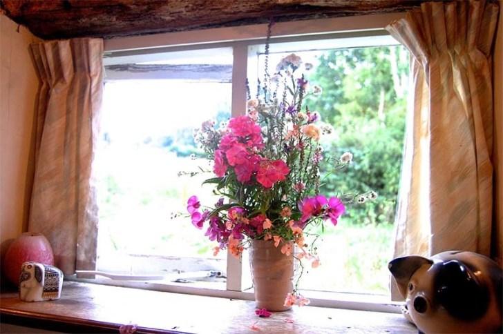 cuidar correctamente las flores