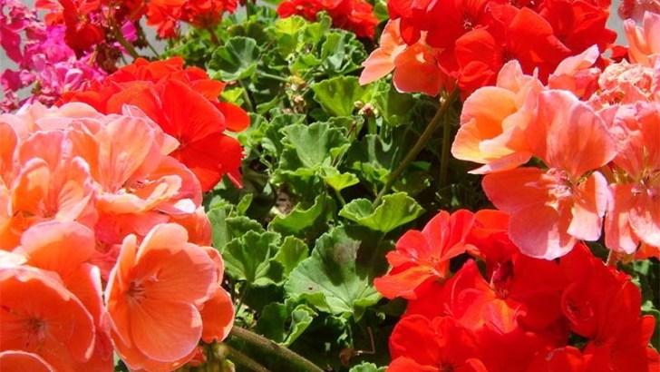 Mejora tu estado de ánimo con estas plantas