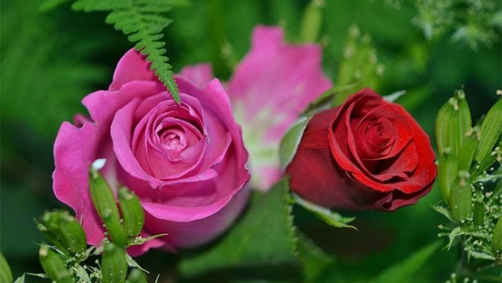 Usos medicinales de las flores