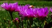 Las plagas más comunes de la primavera