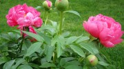 Cuidados básicos para tus plantas del jardín