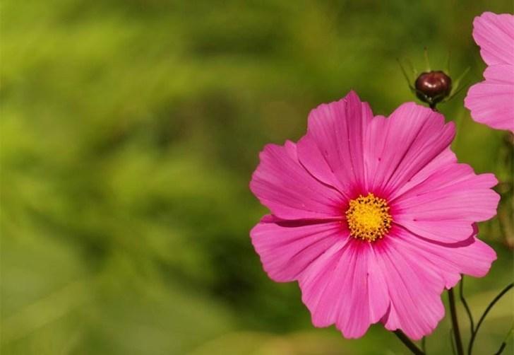 jardin-con-flor