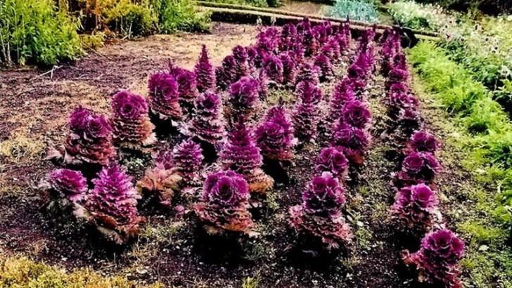 Riega tus plantas mediante la capilaridad