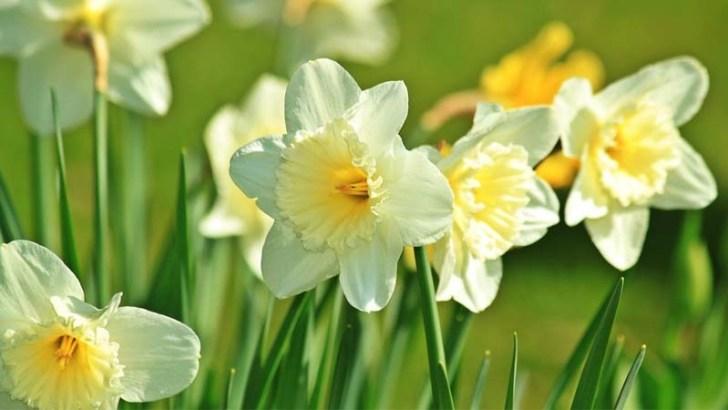 plantas-y-flores-de-primavera