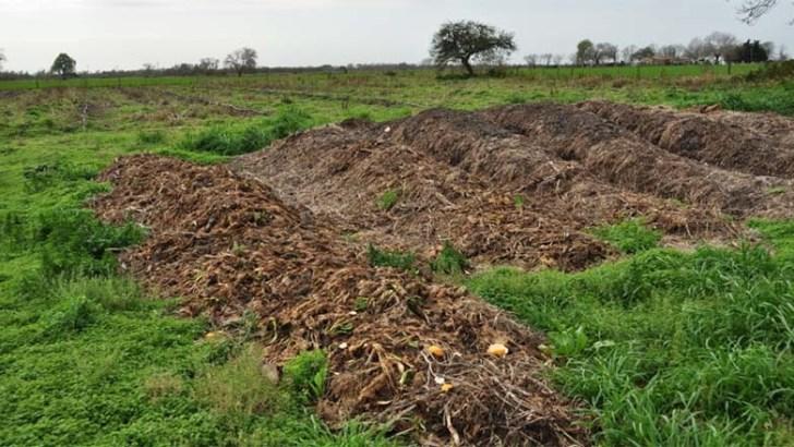 Diferencias entre abono y fertilizante
