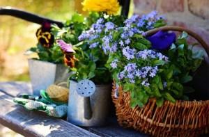 cuidados-del-jardin
