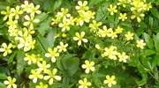 Las plantas se protegen de los rayos ultravioleta