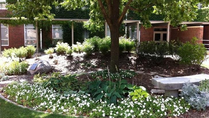 Plagas, el peligro para nuestras plantas en primavera