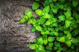 sensibilidad-de-las-plantas