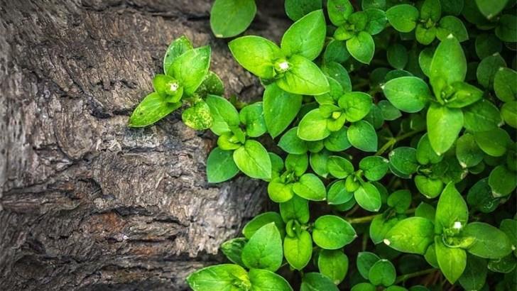 ¿Pueden sentir dolor las plantas?