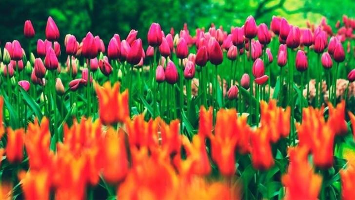 Dale personalidad a tu jardín