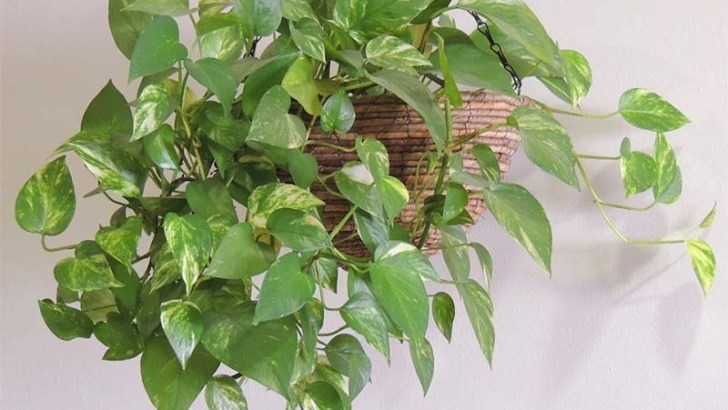 Plantas para decorar tu hogar