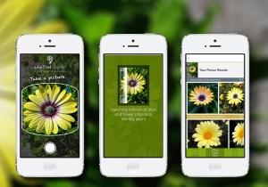 Flower-image[1]