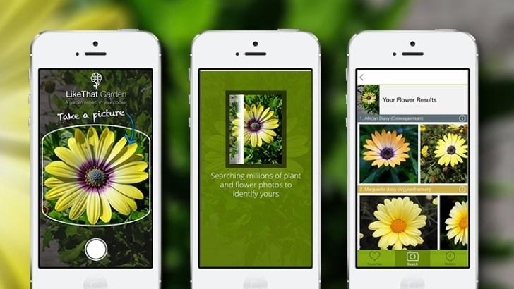 ¿Cómo identificar plantas con una App?