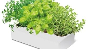 Plantas aromáticas para tu huerto urbano
