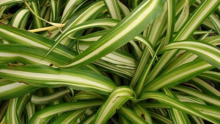4 plantas que te ayudarán a dormir