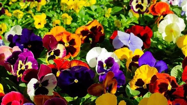 Plantas florales que soportan mejor el verano